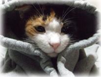 横浜の犬猫専門 動物病院|小山動物病院